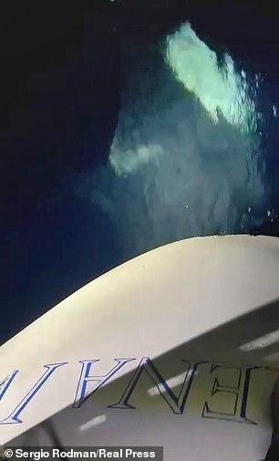 Φάλαινες δολοφόνοι: «Γεύση» από την ταινία τα... Σαγόνια του καρχαρία πήρε μια παρέα ιστιοπλόων στο Γιβραλτάρ όταν δέχθηκε επίθεση από τουλάχιστον τέσσερις όρκες!