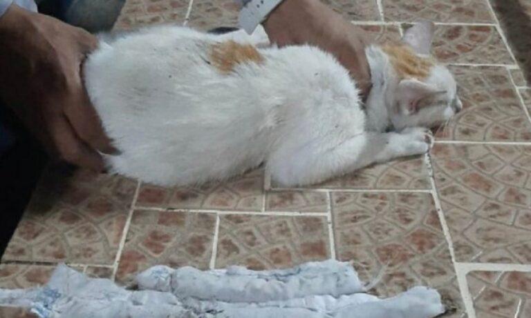Παναμάς – Απίστευτο: «Συνελήφθη» γάτος-βαποράκι έξω από φυλακή (pic)
