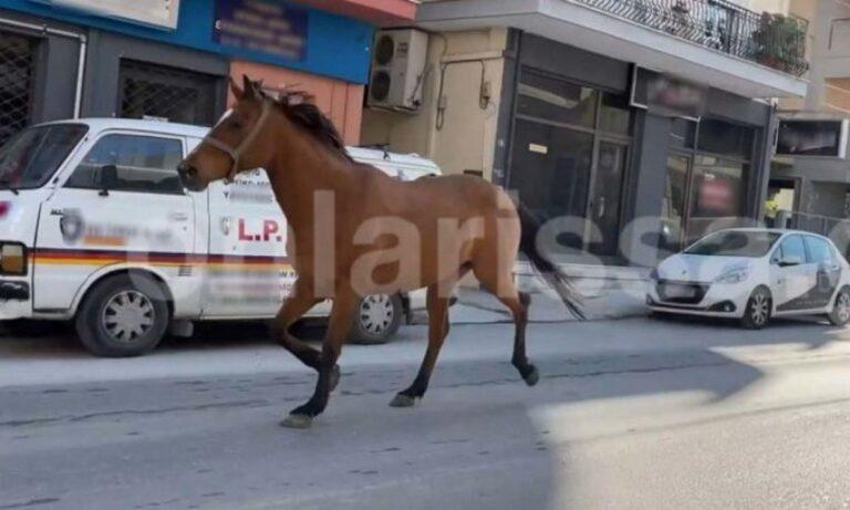Λάρισα: Η… τρελή πορεία ενός αλόγου μέσα στην… καρδιά της πόλης (vid)