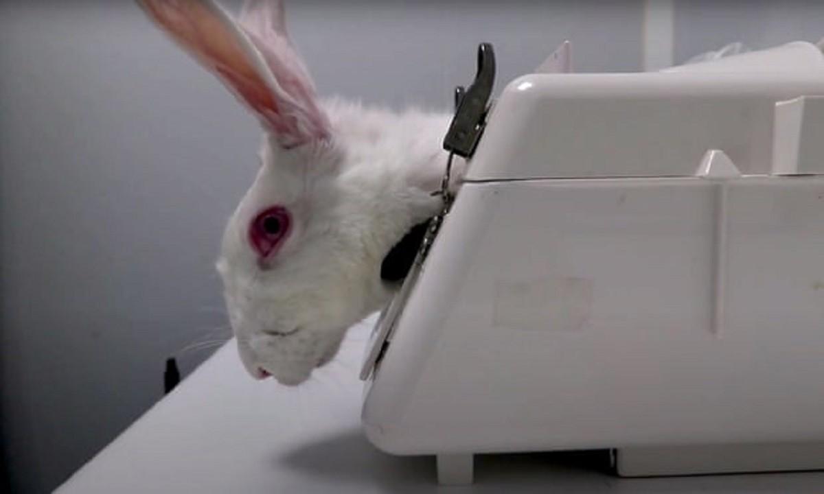 Ισπανία: Αντιδράσεις για εργαστήριο που έκανε πειράματα σε ζώα λόγω βασανισμών – Εκστρατεία για το κλείσιμό του