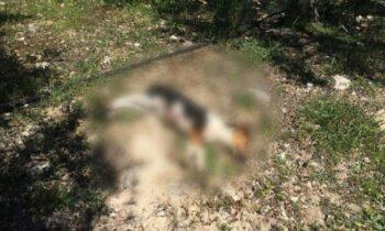 Κτηνωδία στην Κρήτη: Εκτέλεσε εν ψυχρώ κουτάβι, αφού πρώτα το βασάνισε