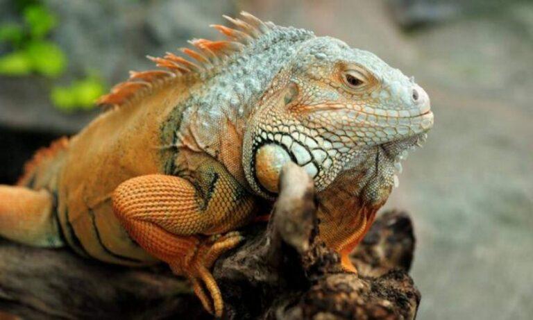 Πολωνία: Το επικίνδυνο ζώο που παραμόνευε σε δέντρο ήταν τελικά… κρουασάν