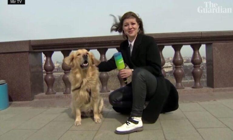 VIRAL – Ρωσία: Σκύλος κλέβει το μικρόφωνο ρεπόρτερ σε live μετάδοση