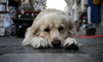 Καταζητείται από τις αρχές ο άντρας που δηλητηριάζει σκυλιά στην Πάτρα. Από τους αστυνομικούς του Γ΄ Αστυνομικού Τμήματος Πατρών σχηματίστηκε δικογραφία για παράβαση