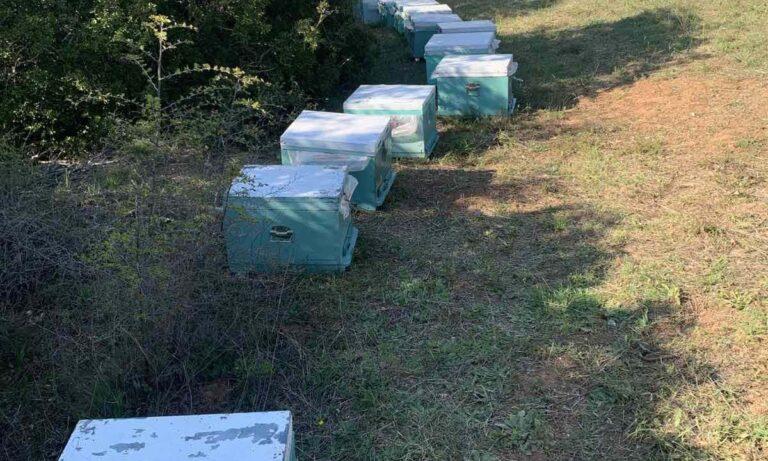 Θεσσαλονίκη: 68χρονος έκλεβε κυψέλες μελισσών από αγροτικές περιοχές