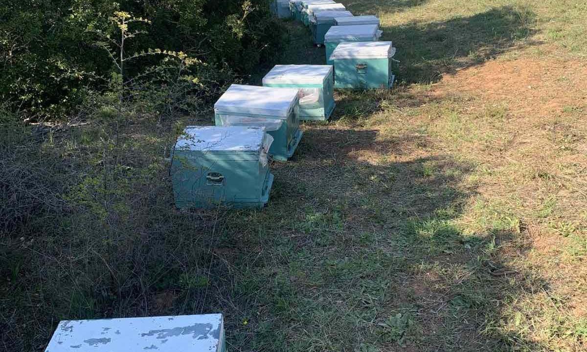 Θεσσαλονίκη: Κυψέλες μελισσών κατηγορείται ότι έκλεβε ένας 68χρονος άνδρας από αγροτικές περιοχές.