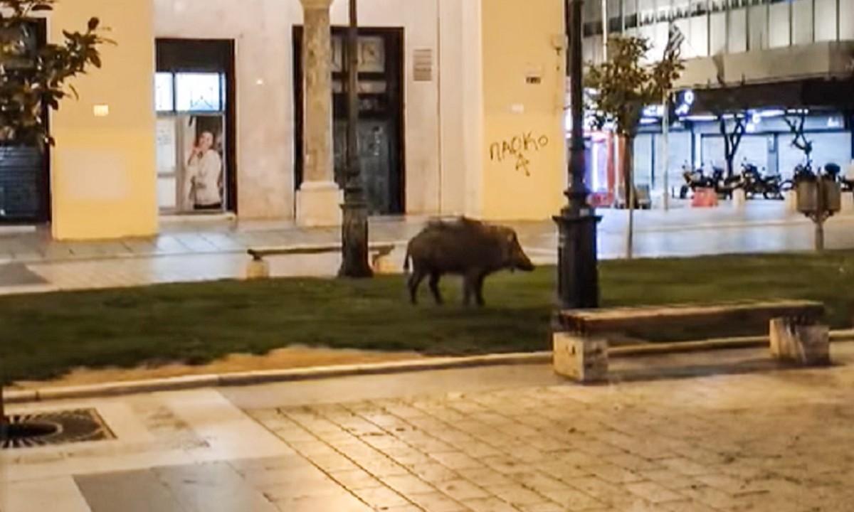 Αγριογούρουνο έσπασε την βραδινή καραντίνα στη Θεσσαλονίκη! (vid)
