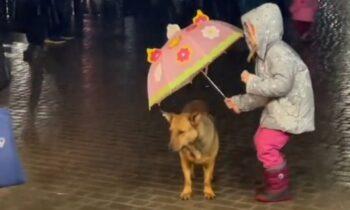 Viral: Κοριτσάκι προστατεύει από τη βροχή σκύλο με την ομπρέλα του (vid)