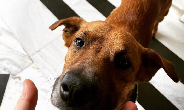 Άκης Σκέρτσος: Με τον σκύλο του πρωθυπουργού έστειλε ευχές υφυπουργός