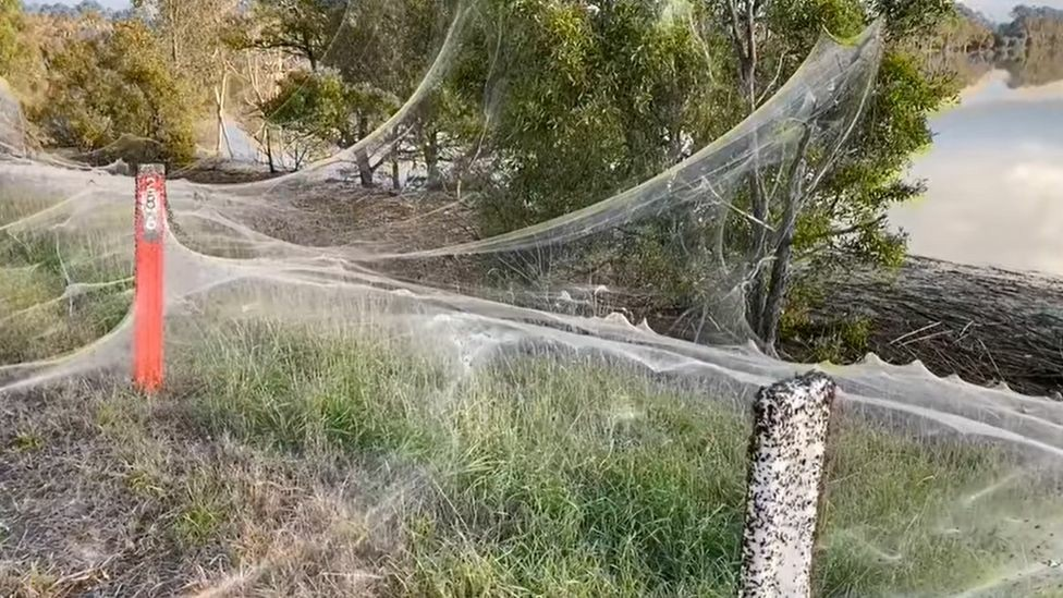 Αυστραλία: Το φαινόμενο του «ballooning» έκανε την εμφάνισή του στην περιοχή Gippsland της Βικτόρια και οι εικόνες είναι εντυπωσιακές.