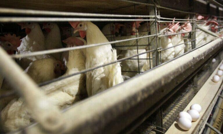 Kίνα: Καταγράφηκε το πρώτο κρούσμα του στελέχους H10N3 της γρίπης των πτηνών σε άνθρωπο, όπως ανακοίνωσε η Εθνική Επιτροπή Υγείας της χώρας.