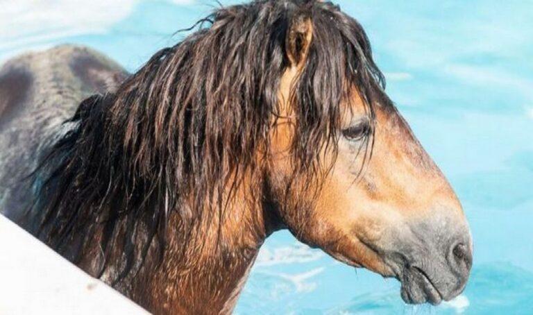 Viral: Στην Κεφαλονιά άλογο βούτηξε σε πισίνα ξενοδοχείου!