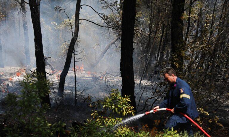 Σε 19 προσαγωγές και 6 συλλήψεις προχώρησε η Αστυνομία τις τελευταίες ημέρες με την κατηγορία του εμπρησμού στα μέτωπα της φωτιάς που έκαψαν τη χώρα.