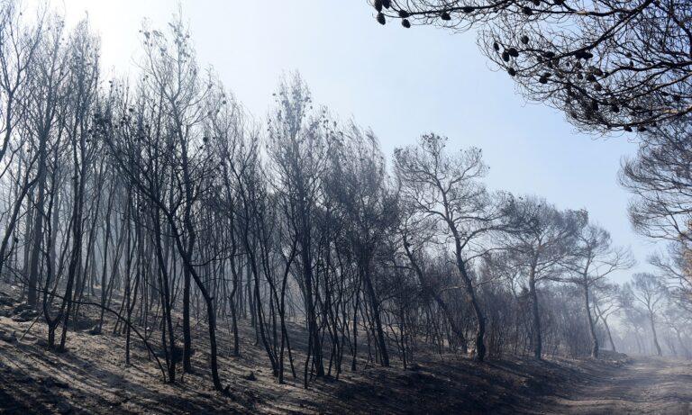 Φωτιές: Τώρα καθαρίζουν τα δάση που κάηκαν – Κάνουν έργα για να μην πνιγούμε