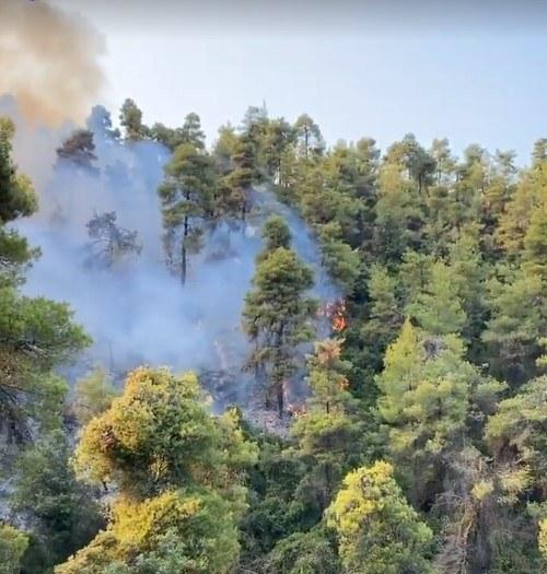 Χαλκιδική: Υπό μερικό έλεγχο η φωτιά στη Σιθωνία