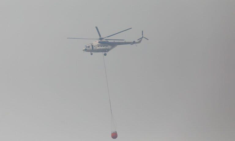 Φωτιά τώρα: Ξέσπασε πυρκαγιά στις Πετριές στη Νότια Εύβοια – Ισχυρές πυροσβεστικές δυνάμεις