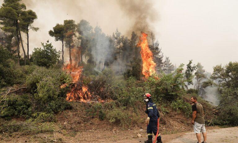 «Η φωτιά θα φτάσει στην Χαλκίδα» – Σκηνικό χάους στην Εύβοια