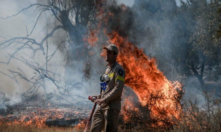Φωτιά στα Βίλια: Πύρινη κόλαση για 4η μέρα – Εκκενώνονται οι οικισμοί Καραούλι, Παλαιοχώρι, Πανόραμα και Αγία Σωτηρία
