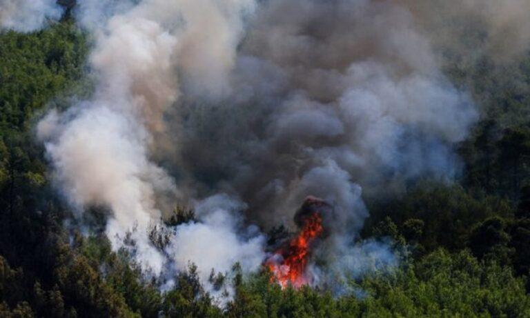 Θρίλερ: Βρήκαν κρανίο μετά τη φωτιά στα Βίλια