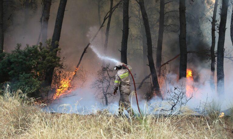 Στο μικροσκόπιο των αρχών έχουν τεθεί μαρτυρίες για εμπρησμό σε διάφορα σημεία της χώρας, που πλήττεται τα τελευταία 24ωρα από μεγάλες φωτιές- Εριέττα Κούρκουλου