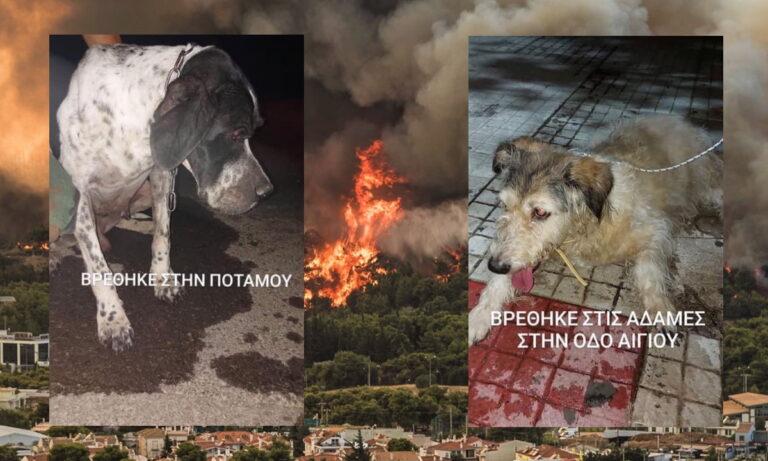 Φωτιά Βαρυμπόμπη : Φιλόζωοι από όλη την Αττική ενώνουν τις δυναμεις τους μέσα από τα social media
