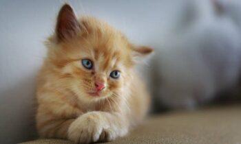 Σαλαμίνα: Σκότωσε γάτα με σκουπόξυλο