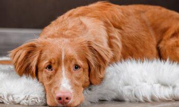 Όλο και περισσότερα περιστατικά κακοποίησης ζώων έχουμε στην χώρα μας. Αυτή τη φορά σκύλος δολοφονήθηκε στη Θεσσαλονίκη!