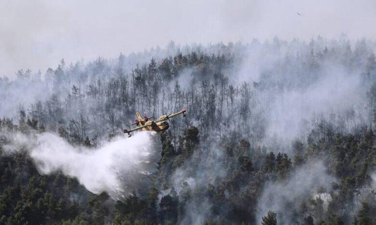 Φωτιά στα Βίλια: 3η μέρα καταστροφής – Κίνδυνος για Παλαιοχώρι και Θέα