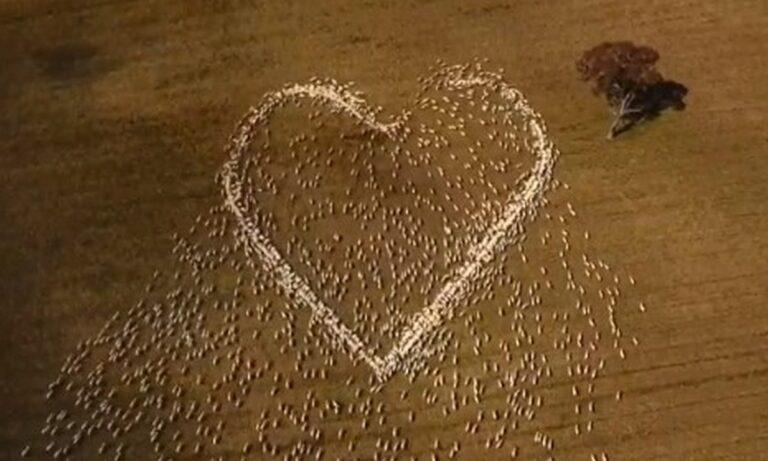 Viral: Ένας κτηνοτρόφος στην Νότια Ουαλία, λόγω του κορονοϊού, αποφάσισε να πει το τελευταίο «αντίο» στην θεία του με ένα ξεχωριστό τρόπο.
