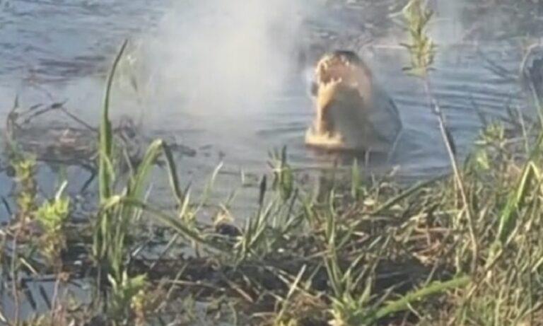 Viral: Αλιγάτορας καταβροχθίζει drone στον αέρα! (vid)