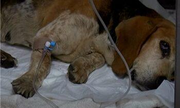 Κρήτη: Πέταξαν σκυλίτσα με όγκο σε φαράγγι-Έκλαιγε σπαρακτικά!