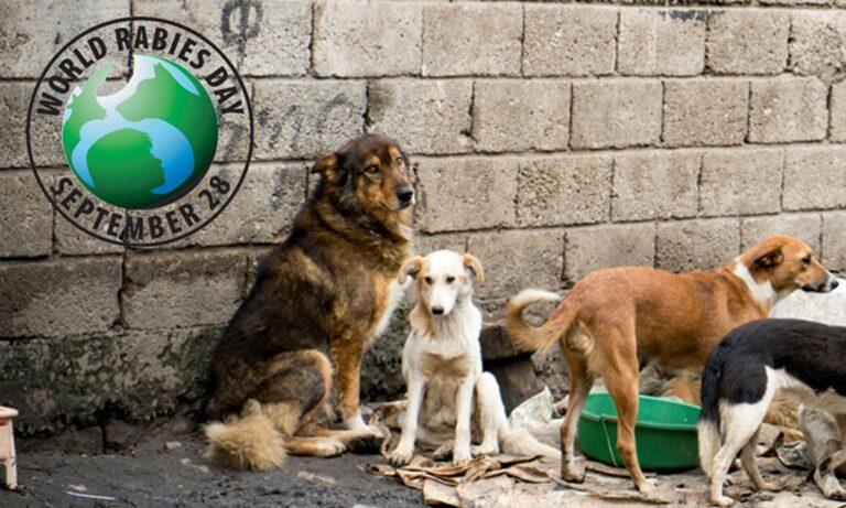 28 Σεπτεμβρίου: Σήμερα γιορτάζεται η Παγκόσμια Ημέρα κατά της Λύσσας
