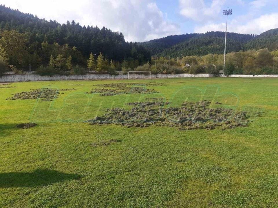 Καρπενήσι: Αγριογούρουνα κατέστρεψαν τα γήπεδα του Αθλητικού Κέντρου