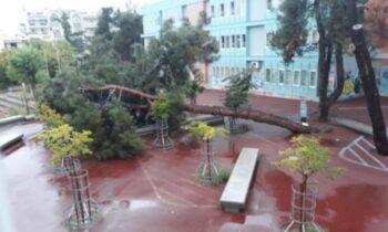 Μεγάλο πεύκο έπεσε στο 31ο γενικό λύκειο Θεσσαλονίκης - Από θαύμα δεν χτύπησαν μαθητές